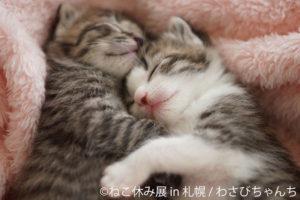 CAT(猫)「ねこ休み展」