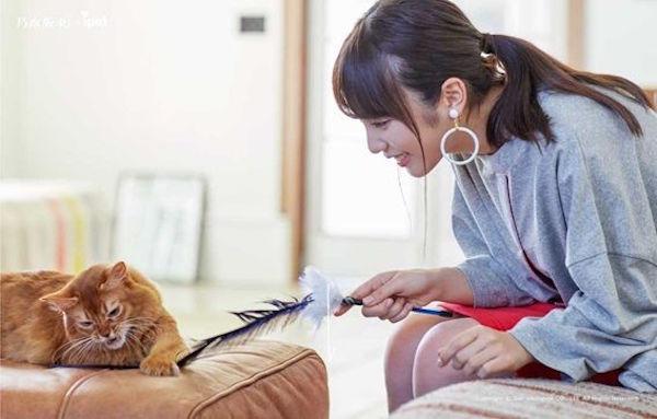 乃木坂46×ipet保険加入キャンペーン(与田祐希と猫のジャーバ)