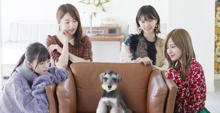 乃木坂46出演『犬と、猫と、乃木坂と。』第4話